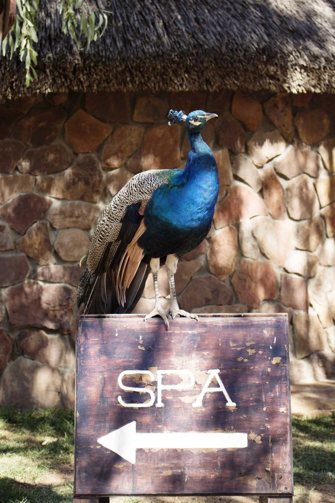 Aquila Spa Review Liezel Malherbe 9Lives 1