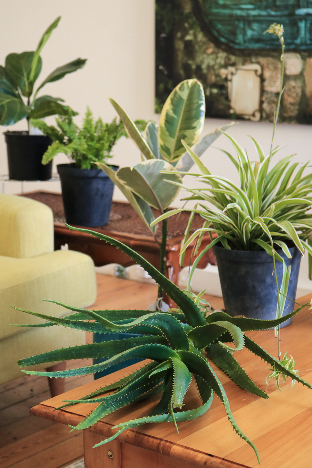 Air Purifying Plants For Bedroom: Our Favourite Air-purifying Indoor Plants